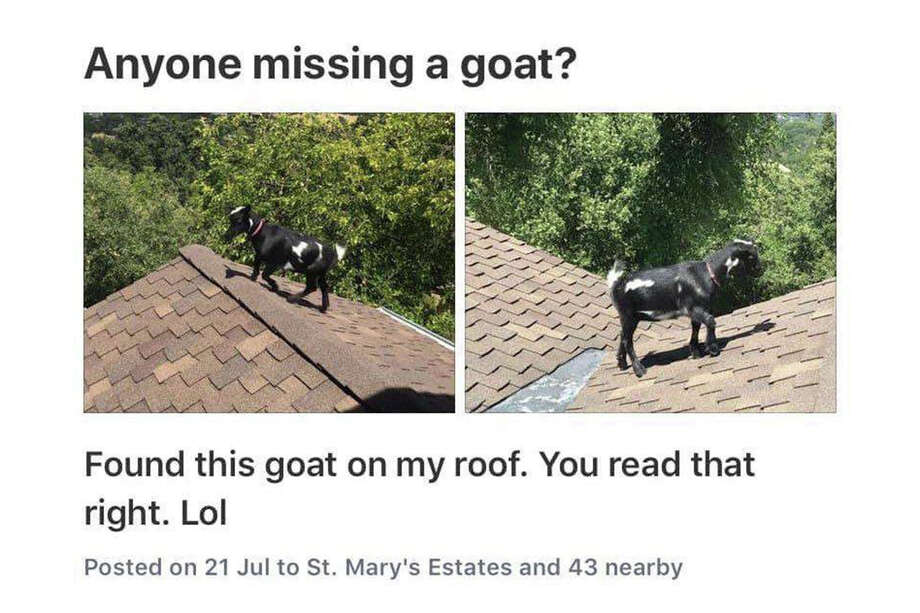 St. Mary's Estates, Lafayette, July 2019 Best of Bay Area Nextdoor 2019: Posts from the Twitter account that features the most hilarious items from the Nextdoor site. Photo: Bay Area Nextdoor
