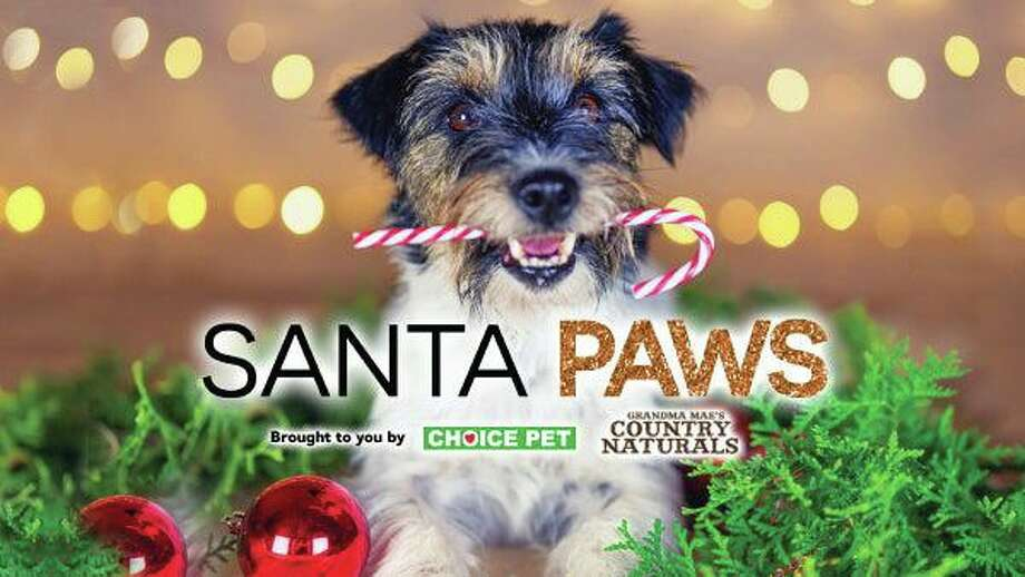 A Santa Paws photo-op event will take place at the Stamford Town Center Dec. 15. Photo: Shopstamfordtowncenter.com