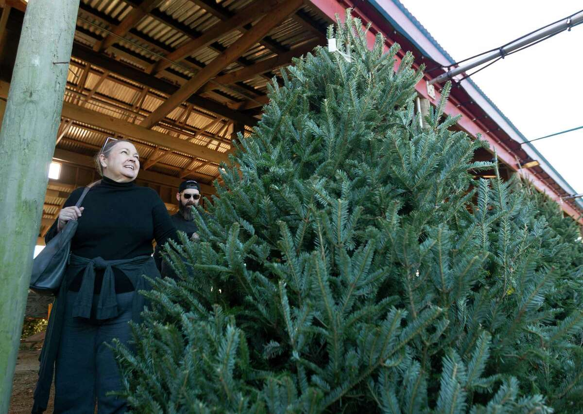 Susan Ford of Spring looks over a eight-foot Fraser Fir tree with her son, Austin, at Spring Creek Growers, Wednesday, Dec. 11, 2019, in Magnolia.