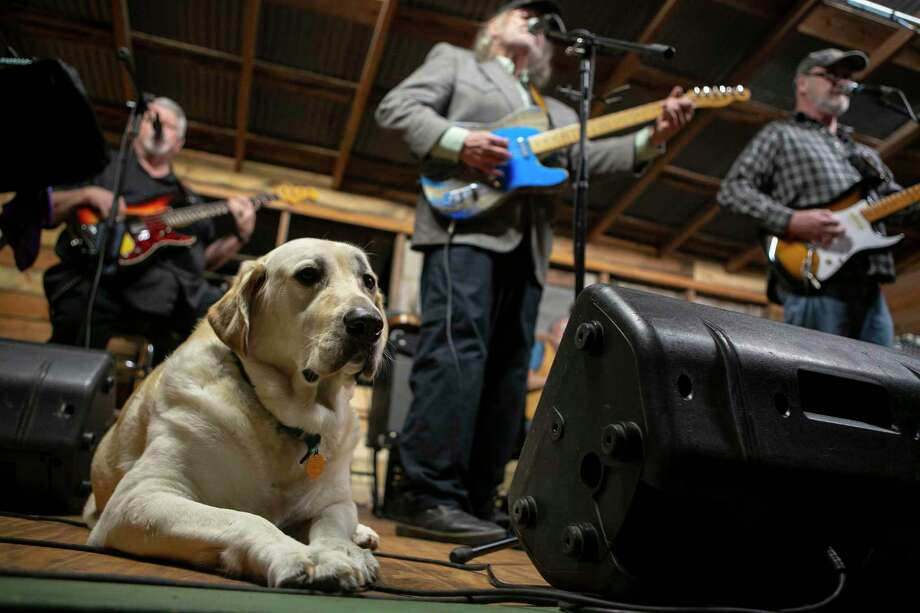 Kelly the dog keeps watch as The Lost Sounds of a Texas Honky Tonk band plays at Hye Hall. Photo: Josie Norris /Staff Photographer / **MANDATORY CREDIT FOR PHOTOG AND SAN ANTONIO EXPRESS-NEWS/NO SALES/MAGS OUT/TV