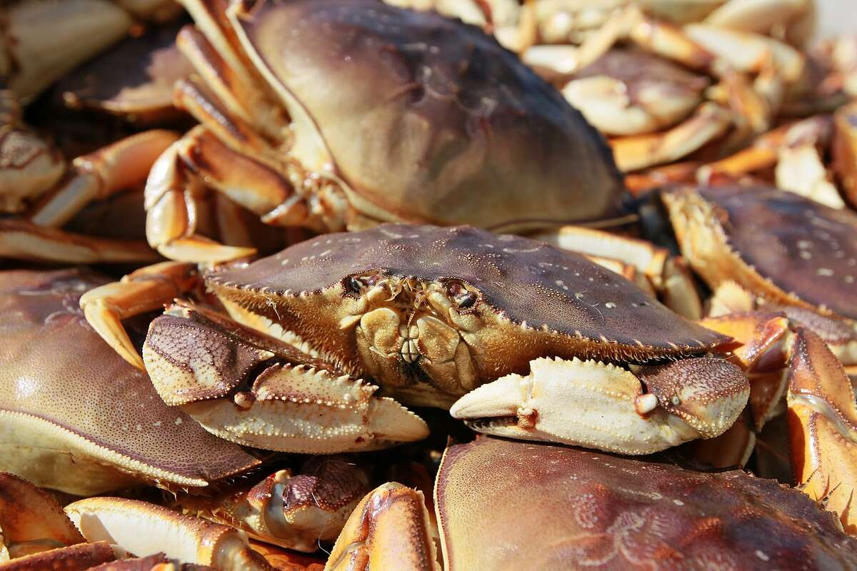 FILE - A Dungeness Crab sits in a bin after being offloaded from a fishing vessel on November 17, 2010 in San Francisco, Calif.