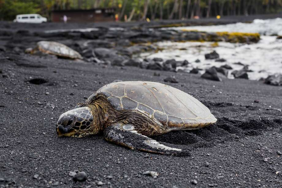 Representatives estimated the 2 to 3-year-old turtle was not stranded for very long as it did not appear to be dehydrated, but said it was suffering from various medical issues that could have been caused by contact with a boat propeller. (File photo)