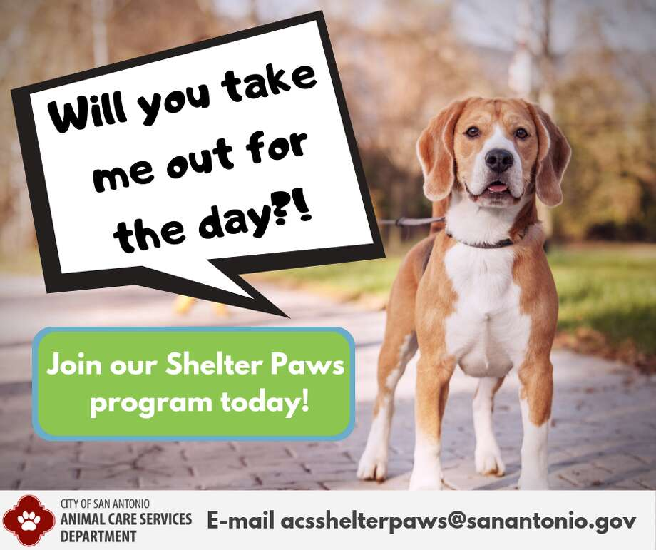 "The initiative is called ""Shelter Paws"" and it sends dogs on adventures with volunteers who are interested in taking them out for the day, or even a few hours. The dogs are sent with a a leash, collar and a harness complete with an ""adopt me"" sleeve. ACS also packs them a backpack filled with essentials for their trips — a blanket, water bowl, treats and dog-friendly spots in the city. The initiative launched in March, but a recent tweet is increasing visibility for the program. Photo: City Of San Antonio Animal Care Services"