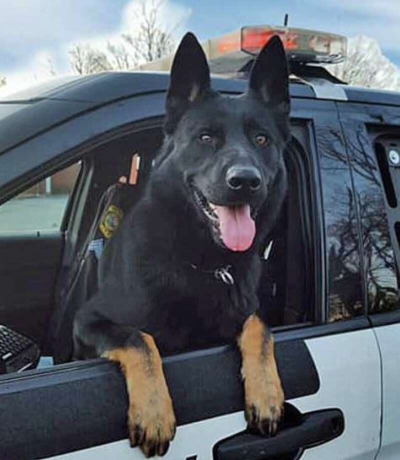 Hamden Police Sgt. Jason Venditto and his K-9 partner 'Knight' tracked down a 15-year-old New Haven male who is accused of driving a stolen car on Tuesday, Dec. 17, 2019. Photo: Hamden Police Photo