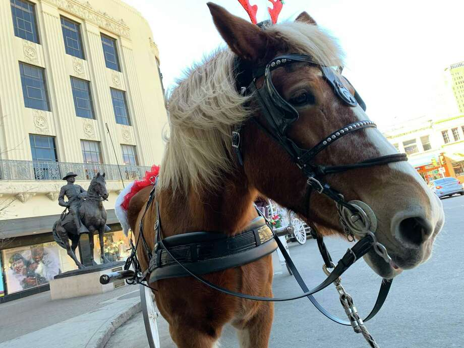 Bluebonnet Carriage horse Bon-Bon sports shiny red antlers for the holidays. A reader, however, sees nothing glamorous about the life of carriage horses. Photo: René A. Guzman /Staff