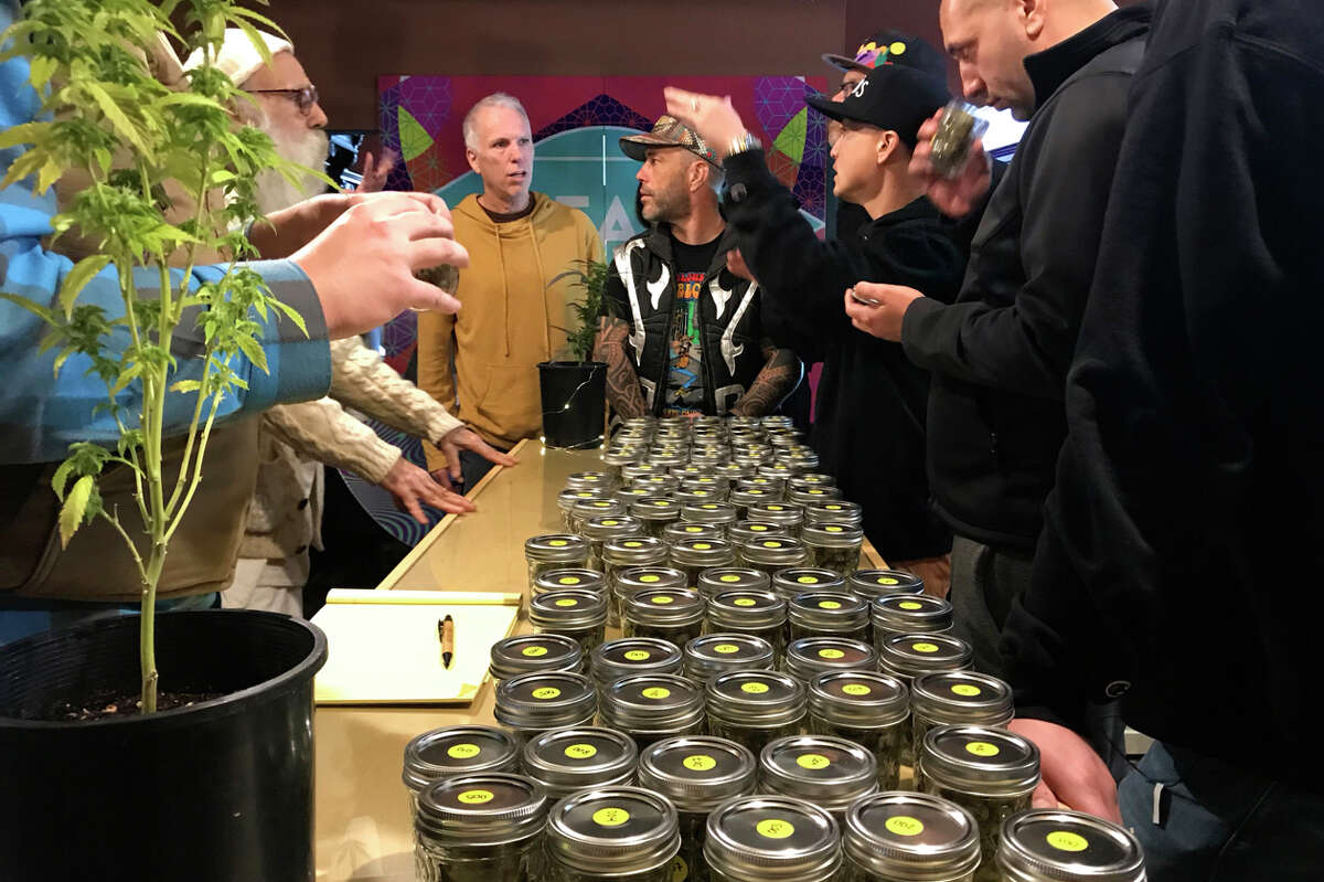 Cannabis samples judged in the Emerald Cup 2019.