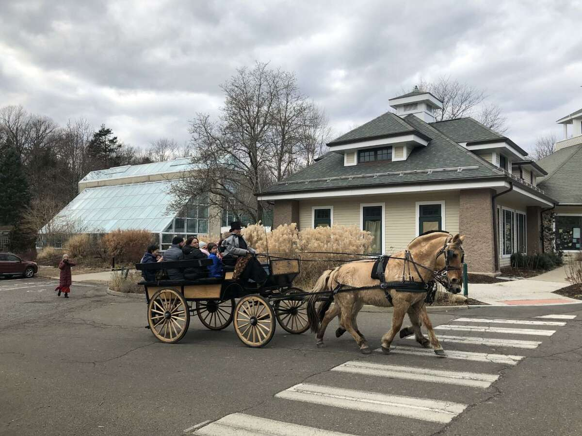 Horses on horse-drawn wagons at the New Canaan Nature Center's Winter Wonderland take attendees at the event on rides around the center's property at 144 Oenoke Ridge, on Sunday, December 15, 2019.