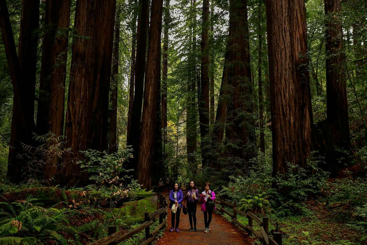 Park visitors walking through Cathedral Grove in Muir Woods, in Mill Valley, CA. Muir Woods is an extremely popular National Parks Service Monument - but its donor, William Kent, has an unfortunate history of anti-Asian bigotry.