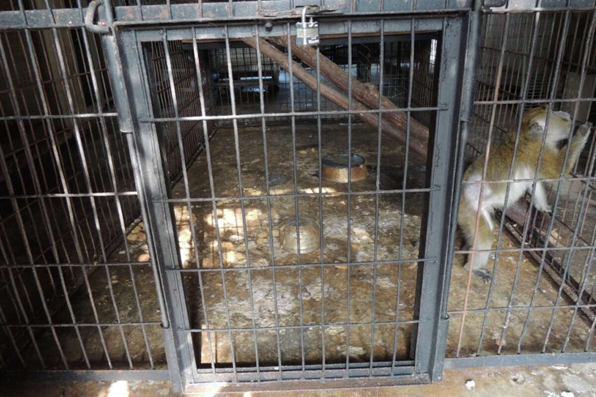 A monkey in a cage at Wilson's Wild Animal Park on Aug. 15. At a court hearing, a state prosecutor described a primate-holding area as a