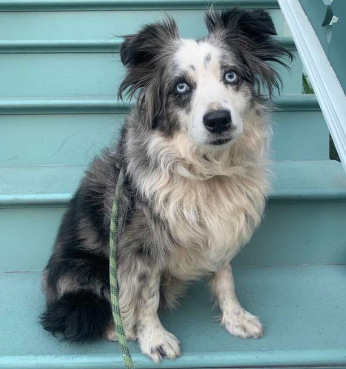 A lost dog, Jackson, who was stolen outside of The Good Life Grocery store in Bernal Heights back in December, was found at an animal shelter in Los Angeles on Monday.