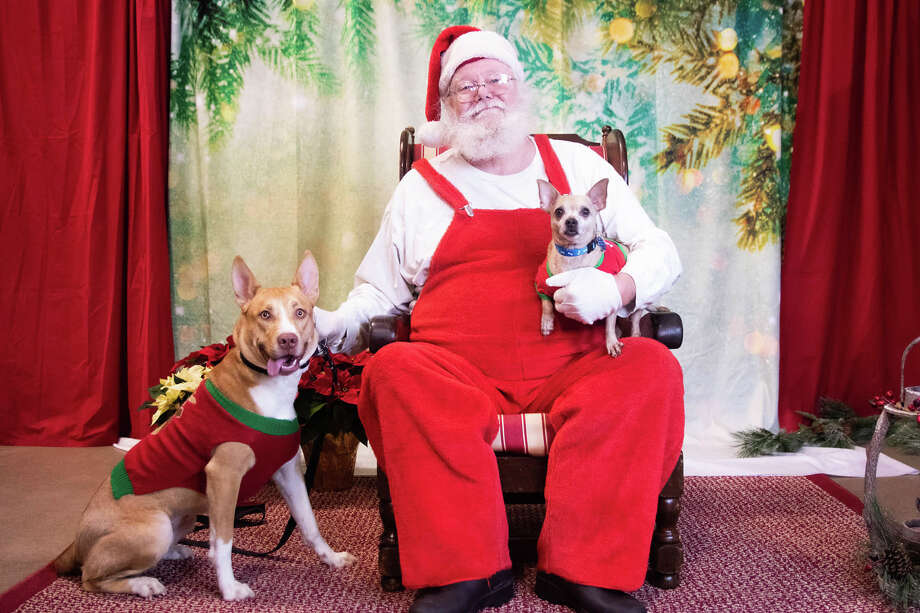 """Seeing Santa at Petsmart in Traverse City on Saturday.""