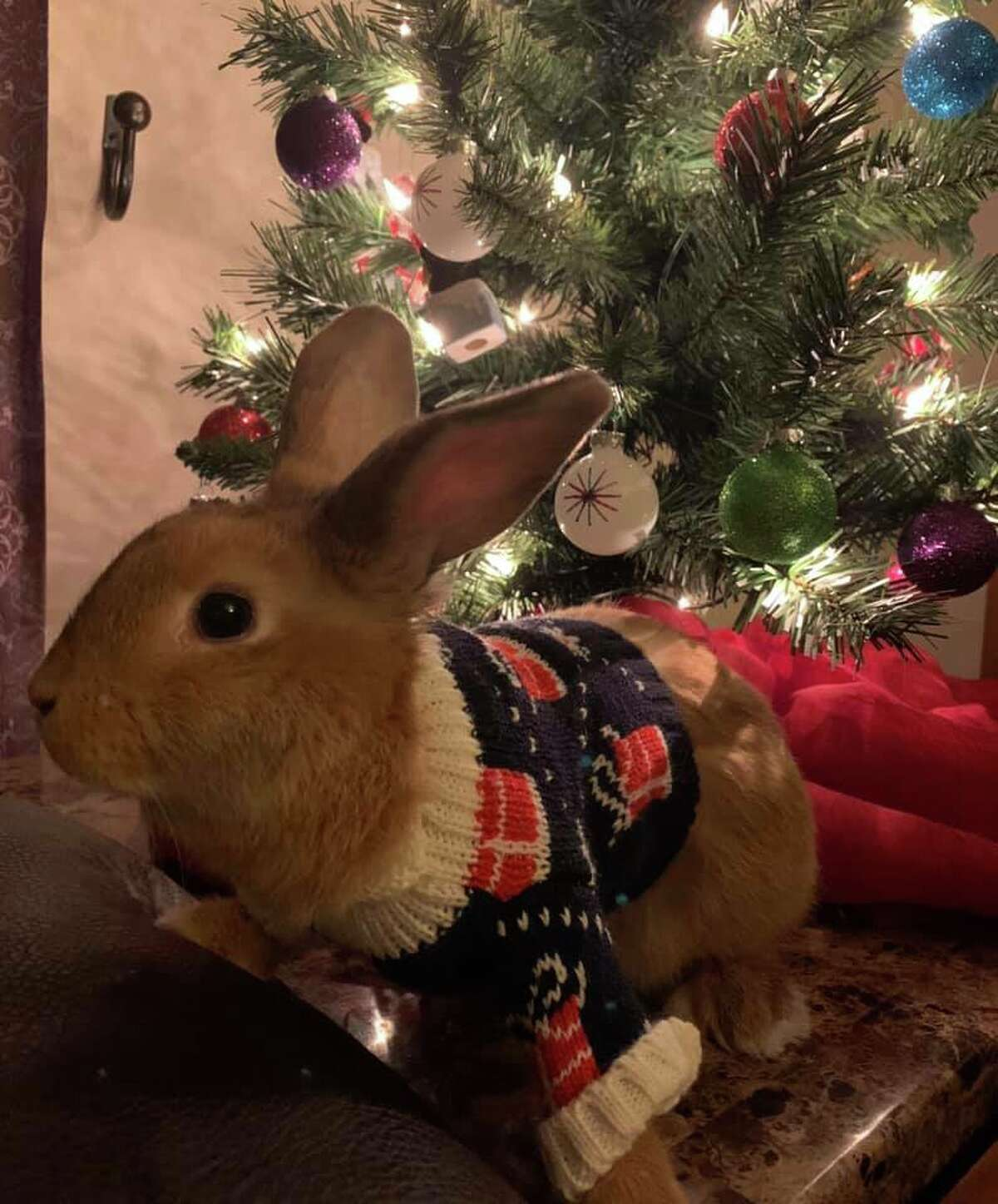 """""""Westin's first Christmas."""" Photo submitted by Ginger Porter-Folkema"""