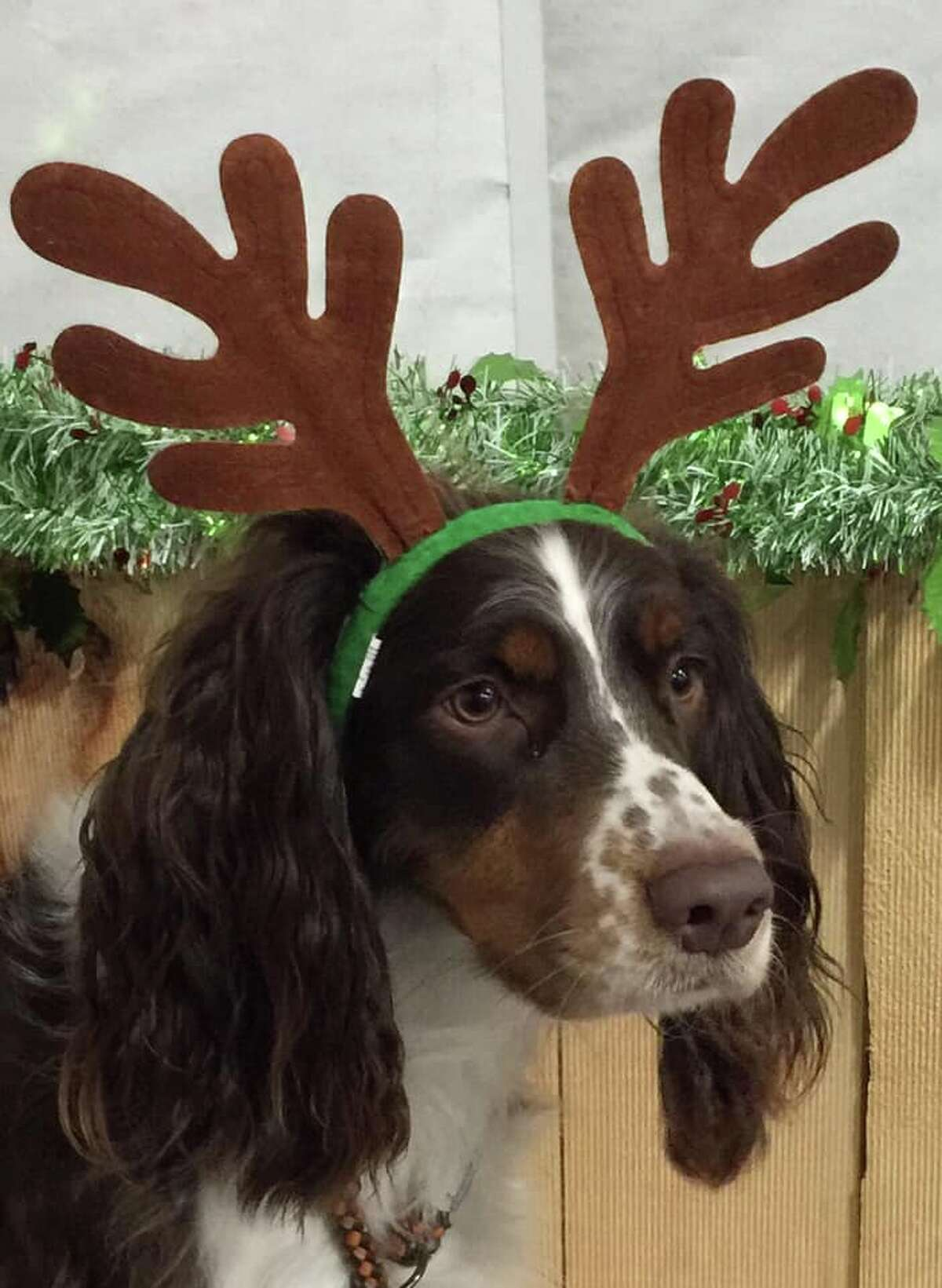 """""""Tizzy says Merry Christmas to one and all!"""" Photo submitted by Pamela K. Willard"""