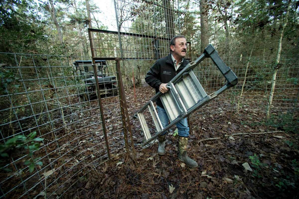 Alan Biggerstaff, owner, Nuisance Wildlife Management & Control, carries a ladder into a hog trap to check on the camera set up in the trap in the W. Goodrich Jones State Forest on Wednesday, Dec. 11, 2019, in Conroe. Feral hogs have been a problem in the neighborhoods near the forest, damaging yards. Residents are also wary of the danger the hogs pose to their safety.