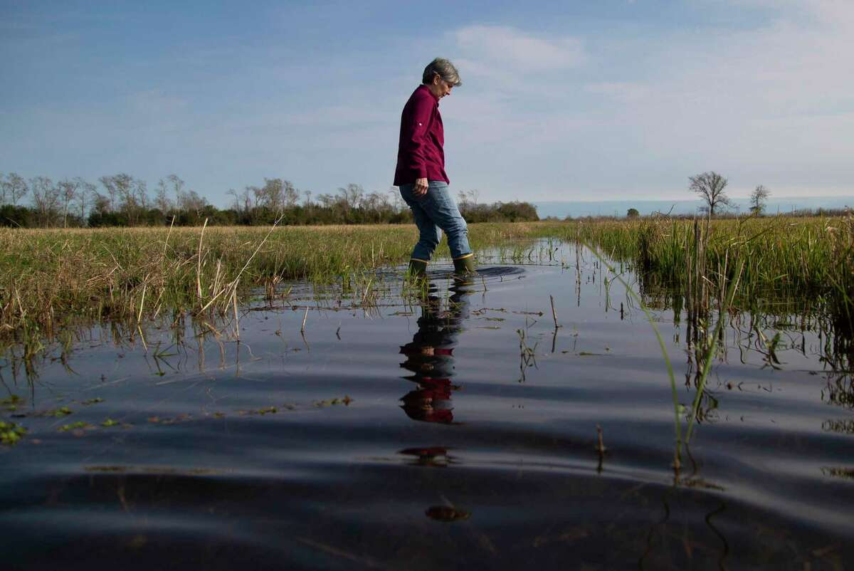 Karen Reneau walks on wet lands on her way to a test crawfish trap on Thursday, Dec. 12, 2019, in Fannett. The Reneau Farms staff rotates their fields to grow different crops different years. One field may be used for crawfish one season, then rice the next.