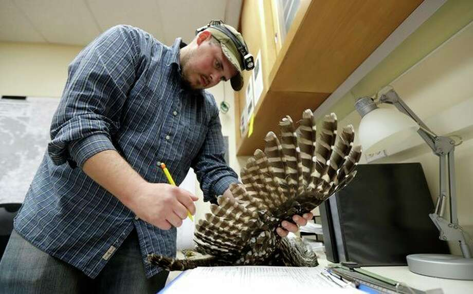 In this photo taken in the early morning hours of Oct. 24, 2018, wildlife technician Jordan Hazan records data in a lab in Corvallis, Ore., from a male barred owl he shot earlier in the night. The owl was killed as part of a controversial experiment by the U.S. government to test whether the northern spotted owl's rapid decline in the Pacific Northwest can be stopped by killing its larger and more aggressive East Coast cousin, the barred owl, which now outnumber spotted owls in many areas of the native bird's historic range. (AP Photo/Ted S. Warren) / Copyright 2018 The Associated Press. All rights reserved.