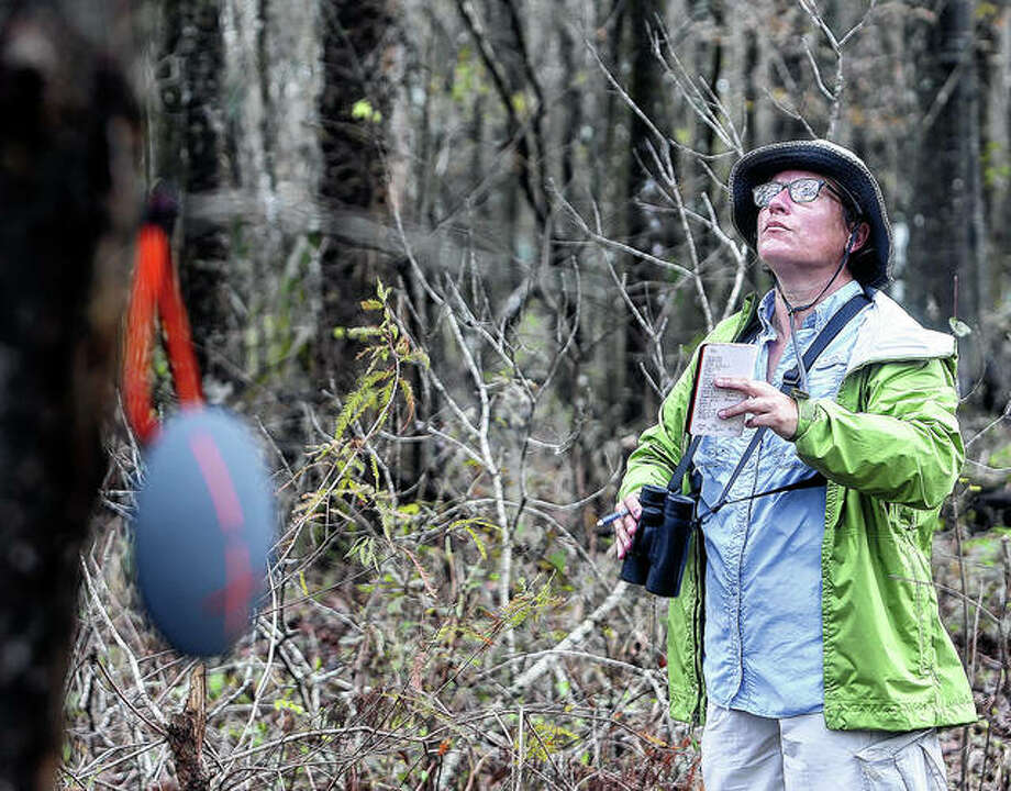 Delaine Leblanc looks for birds off of La. 20 near Chackbay, Louisiana, as she participates Jan. 2, 2017, in the annual Christmas Bird Count. It's been 120 years since New York ornithologist Frank Chapman launched his Christmas Bird Count as a bold new alternative to what had been a longtime Christmas tradition of hunting birds. Photo: Abby Tabor | The Houma Daily Courier Via AP