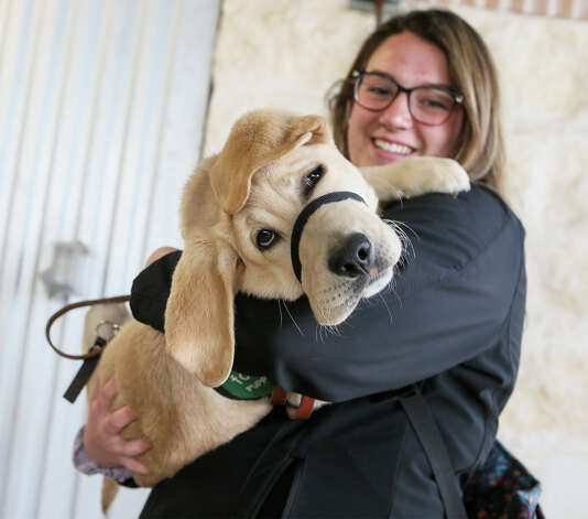 Fisher EasleySmith of Las Cruces, New Mexico holds Kondo, a 14-week-old yellow lab in her arms while other raisers with Guide Dogs for the Blind put their potential dog trainees through a Texas-themed obstacle course at Madison High School on Sunday, March 31, 2019. Photo: Marvin Pfeiffer / Express-News 2019