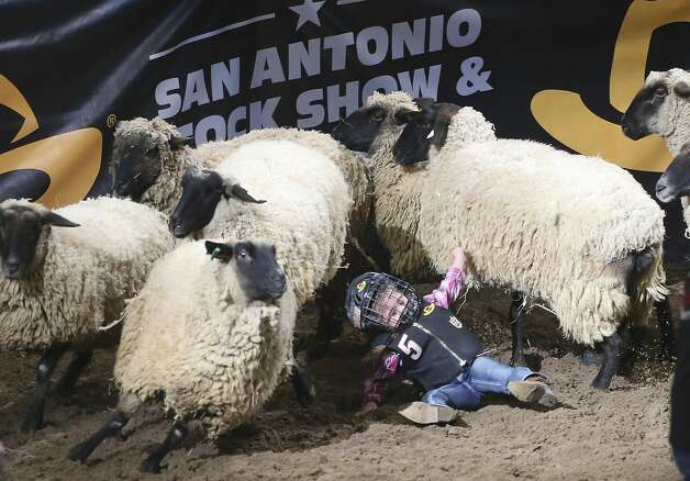 Aleah Villarreal held her ride to the finish during the mutton bustin' event at the San Antonio Stock Show & Rodeo. Villarreal rode her mount to the finish and into a herd before falling off. Her effort garnered her a winning rating of 89 and the champions buckle for the event. Photo: Tom Reel/Staff Photographer