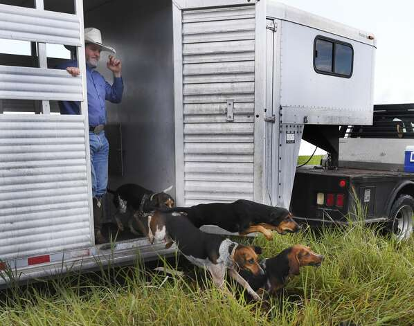 Joe Braman watches as coonhounds run from a trailer to chase down a decoy during a training exercise near Refugio, Texas, on Tuesday, Sept. 24, 2019. Texas Canine Tracking and Recovery sends trained coonhounds to South Africa to aid in the fight against rhino poaching. Photo: Billy Calzada/Staff Photographer