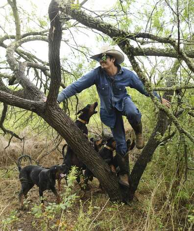 Gilbert Rosales, who plays the part of the decoy, is treed by coonhounds during a Texas Canine Tracking and Recovery training exercise near Refugio, Texas, on Tuesday, Sept. 24, 2019. Photo: Billy Calzada/Staff Photographer