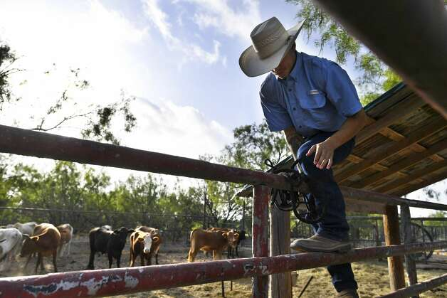 Orlando Villarreal, a tick inspector with the Texas Animal Health Commission, climbs into a pen to gather a herd of cattle to be injected with Dectomax to help fight a tick infestation on Tuesday, July 30, 2019. Photo: Billy Calzada/Staff Photographer