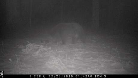 On a frozen night in snow in national forest, a bear -- not hibernating -- was attracted to a water dish