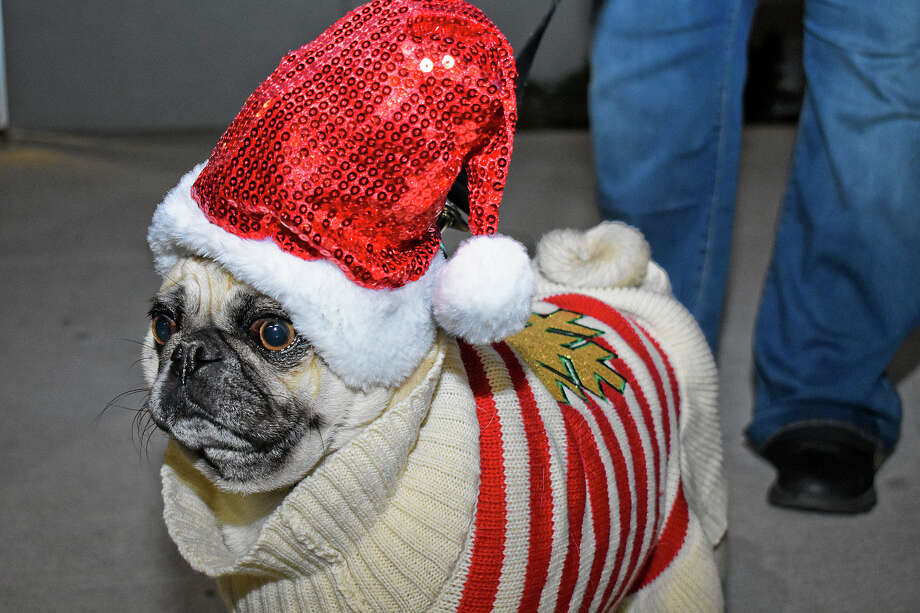 Pet owners dress their dogs in festive garments for the Pawliday Pet Event at Golondrina Food Park. Photo: Diana Garro