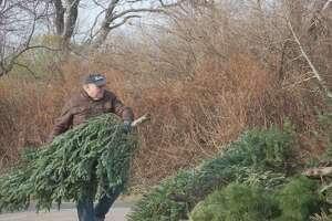 Town resident Ralph DeVito drops off his own tree at Greenwich Point last year. DeVito said at the time he had hoped to set a record by dropping his brother's tree off for recycling on the morning of Christmas Eve but sadly found someone had already beaten him to it.