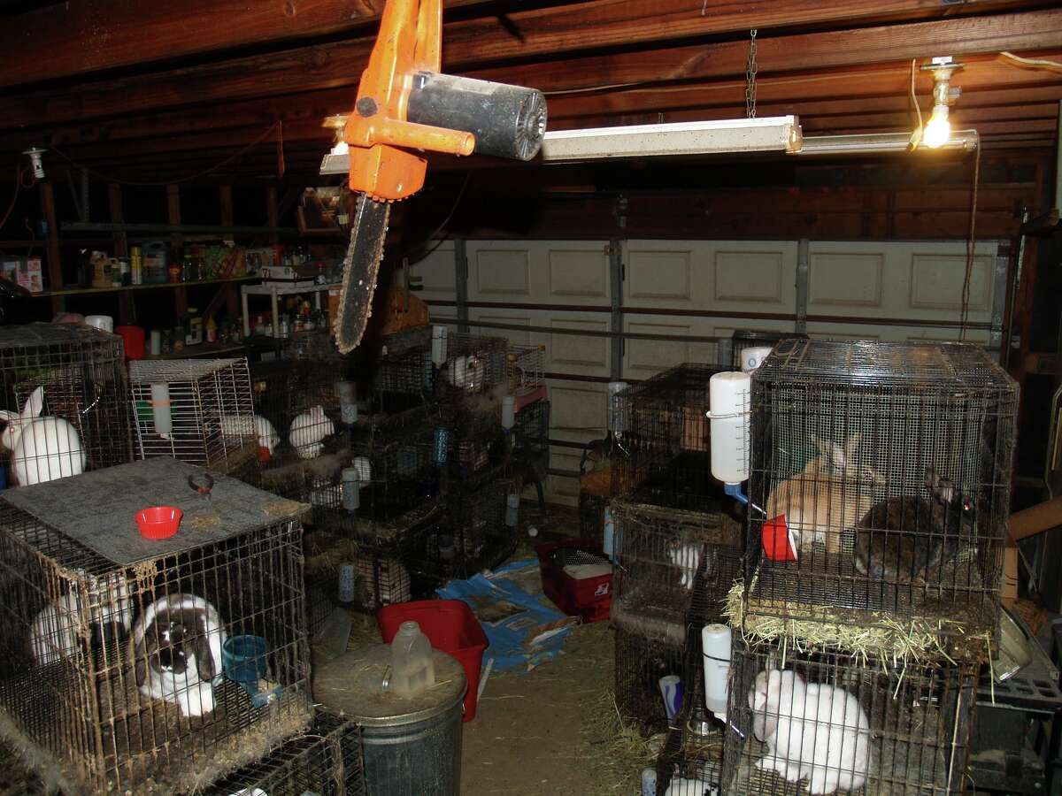 Nearly 70 rabbits and three dogs living in deplorable conditions were seized from a Katy home this week after a domestic disturbance call.