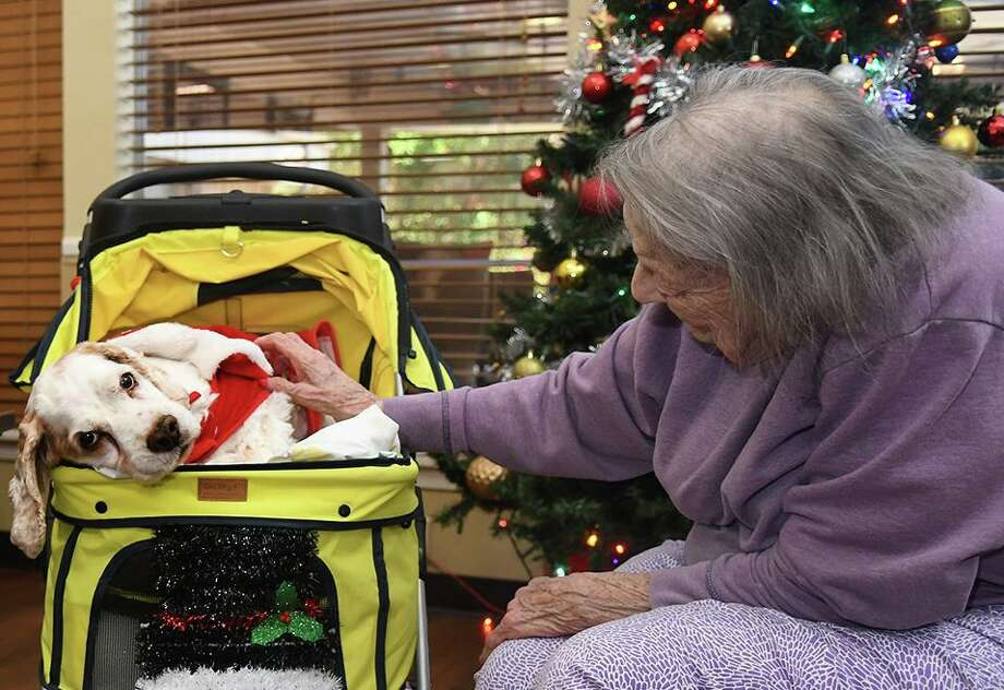 """Bob Wagner, left, holds """"Sally"""", 6 1/2, while Joan Gardner pets """"Teddy Bear"""", 15, during a visit by Pet Therapy Pals of Texas to Lawrence Street Health Care, a senior care center in Tomball, on Dec. 17, 2019. Photo: Jerry Baker, Houston Chronicle / Contributor / Houston Chronicle"""