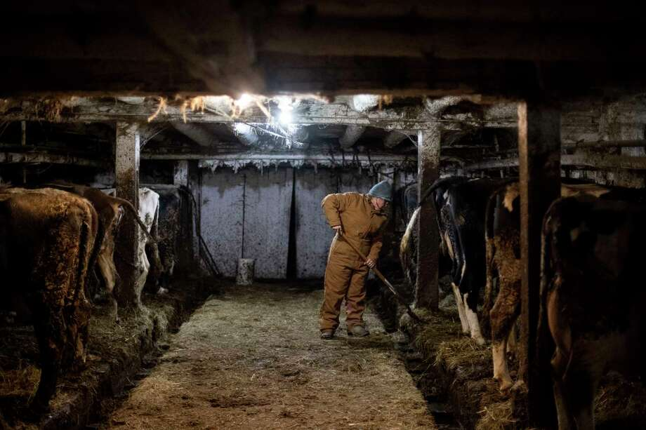 Anne Lee mucks out the main dairy barn Dec. 4 during nightly chores at the Lee family's farm in Berkshire, N.Y. Photo: Washington Post Photo By Carolyn Van Houten / The Washington Post