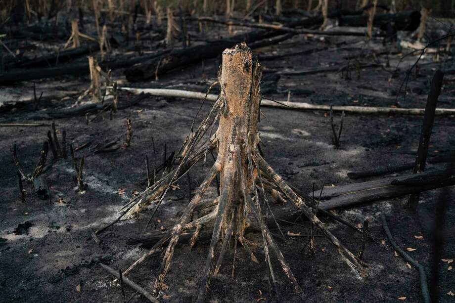 In this Nov. 23, 2019 photo, a cut tree stands in a burned area in Prainha, Para state, Brazil. Official data show Amazon deforestation rose almost 30 percent in the 12 months through July, to its worst level in 11 years. Para state alone accounted for 40 percent of the loss. Photo: Leo Correa / Associated Press / Copyright 2019 The Associated Press. All rights reserved.