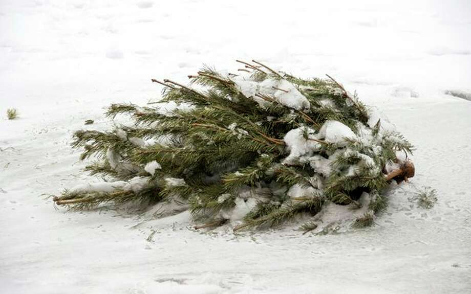 Locals who purchased real Christmas trees can place them on the curb for pick-up in January. Alternatively, individuals can find ways to recycle their trees. (Courtesy photo) / Pitroviz