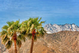Two palm trees and San Jacinto mountains in the background. The picture was taken in Palm Springs, California, in winter.