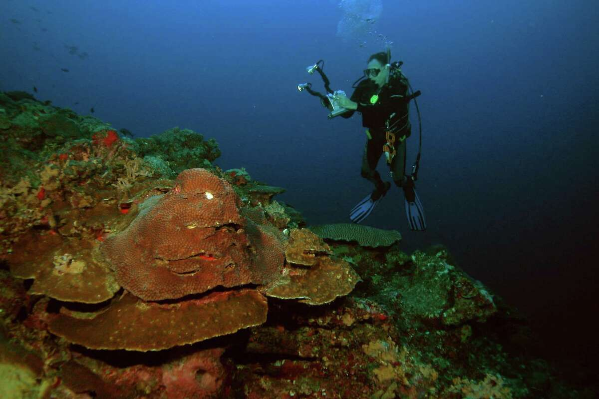 In this picture provided by the Texas Parks and Wildlife Department, diver G.P.Schmahl inspects the coral reef approximately 100 miles off the coast of Louisiana and Texas in this undated photo. Schmahl is surveying the reef for bleaching corals and physical damage caused by Hurricane Rita. (AP Photo/Texas Parks and Wildlife Department)