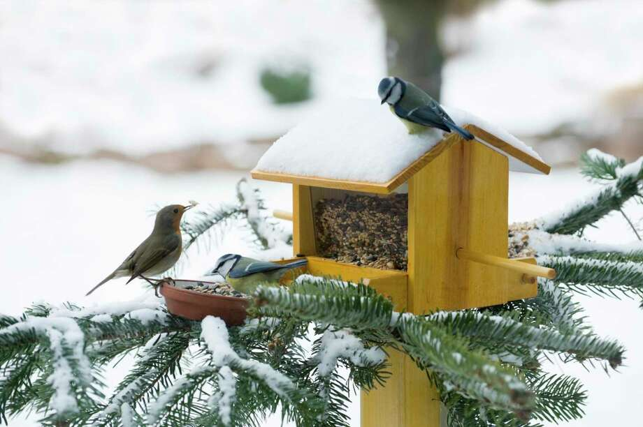 """Parus caeruleus, blue tit and robin in winter at a bird house.There are more images WINTER, click here:"" Photo: Rotofrank / Getty Images / rotofrank"