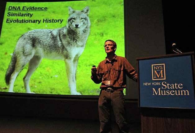 Roland Kays, curator of mammals, talks about his study and radio collaring of coyotes in local suburbs, as well as ongoing research into fishers, foxes and other new predator arrivals and the impact on prey like squirrels and on humans, at the State Museum in Albany, NY on August 10, 2010.  (Lori Van Buren / Times Union) Photo: Lori Van Buren