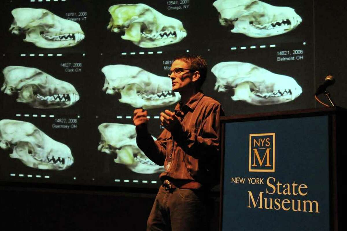 Roland Kays, curator of mammals, talks about his study and radio collaring of coyotes in local suburbs, as well as ongoing research into fishers, foxes and other new predator arrivals and the impact on prey like squirrels and on humans, at the State Museum in Albany, NY on August 10, 2010. (Lori Van Buren / Times Union)