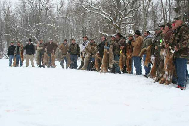 These hunters in Rochester hold up coyotes, as well as red foxes and even a bobcat shot outside the area, during a recent rod and gun club event. ( Photo courtesy of Roland Kays )