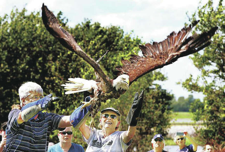 Paul Myer (left) and TreeHouse Wildlife Center executive director Adele Moore release a mature bald eagle into the wild in West Alton, Missouri. Photo: Hearst Illinois
