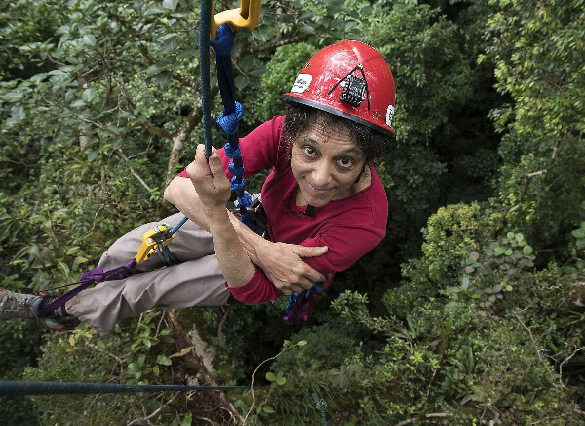 """In this 2014 photo provided by Sybil Gotsch shows ecologist Nalini Nadkarni studying the rainforest canopy in the Monteverde region of Costa Rica. Nadkarni's childhood climbing trees shaped her career and now she's hoping she can get help kids interested in science in an new way: Barbies. Nadkarni has long created her own """"treetop Barbies"""" and has now helped Mattel and National Geographic create a line of dolls with careers in science and conservation. (Sybil Gotsch, via AP)"""
