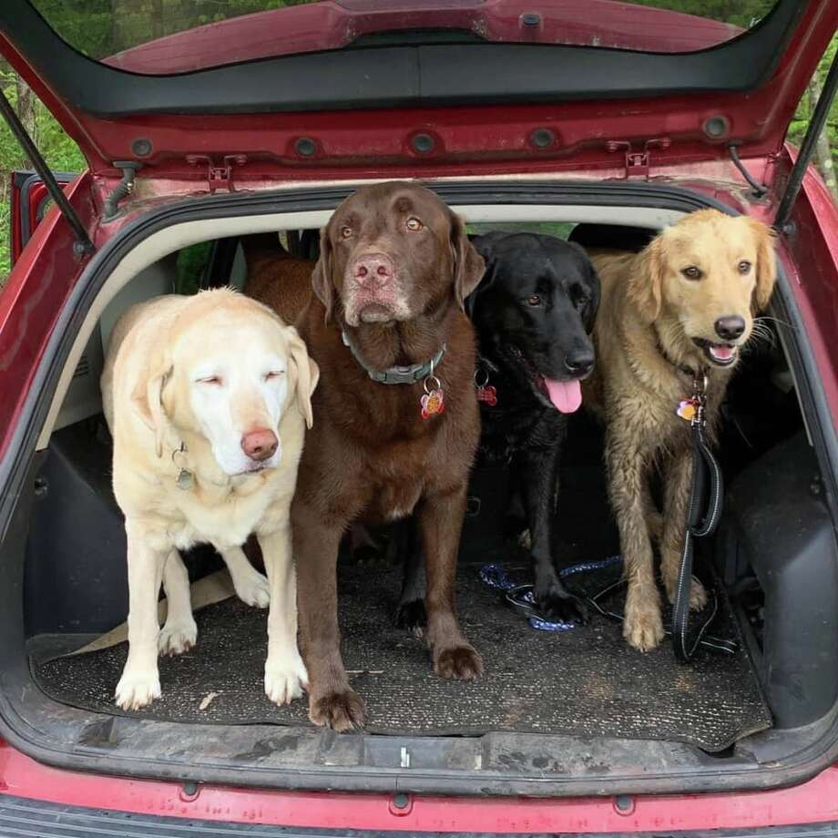 """Our crew after a swim at the pond. Daisy, Charlie, Willie & Opie."" 