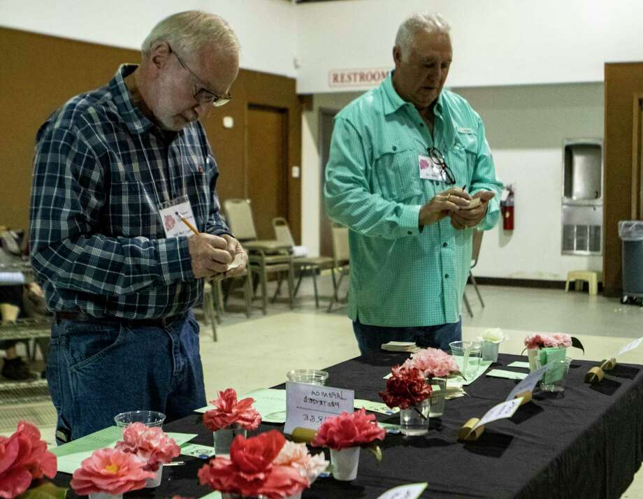Bill McCranor, left, and Don Marcotte judge a line of Camellias during the Coushatta Camellia Society Camellia Show on Saturday, Jan. 12, 2019 at First Christian Church in Conroe. Photo: Cody Bahn, Houston Chronicle / Staff Photographer / © 2018 Houston Chronicle