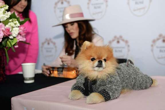 Puffy, one of the Vanderpump Pomeranians, sits on a table while Lisa Vanderpump autographs a bottle of wine for a fan at the Grand Parkway H-E-B in Katy, on Saturday, February 9, 2019.