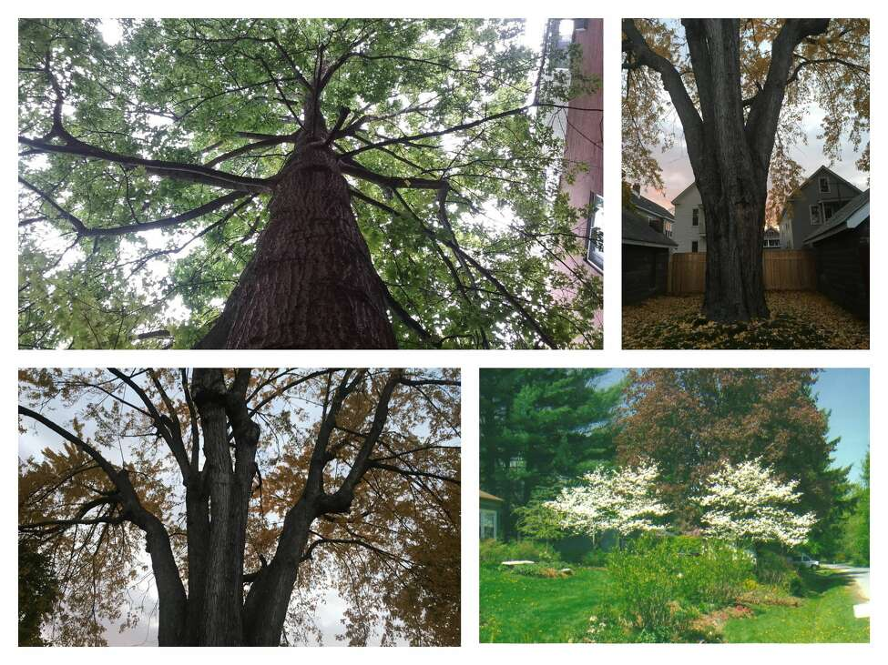 You Could See Your Favorite Tree In The Times Union