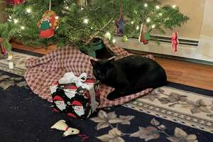Shadow the kitty takes a quiet moment before a little boy would try to catch his tail.