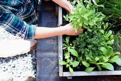 First-time gardeners should keep the bed small.