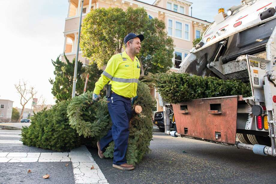 Recology driver Rogelio Gutierrez pulls Christmas trees across the street to his truck. Photo: Blair Heagerty / SFGate