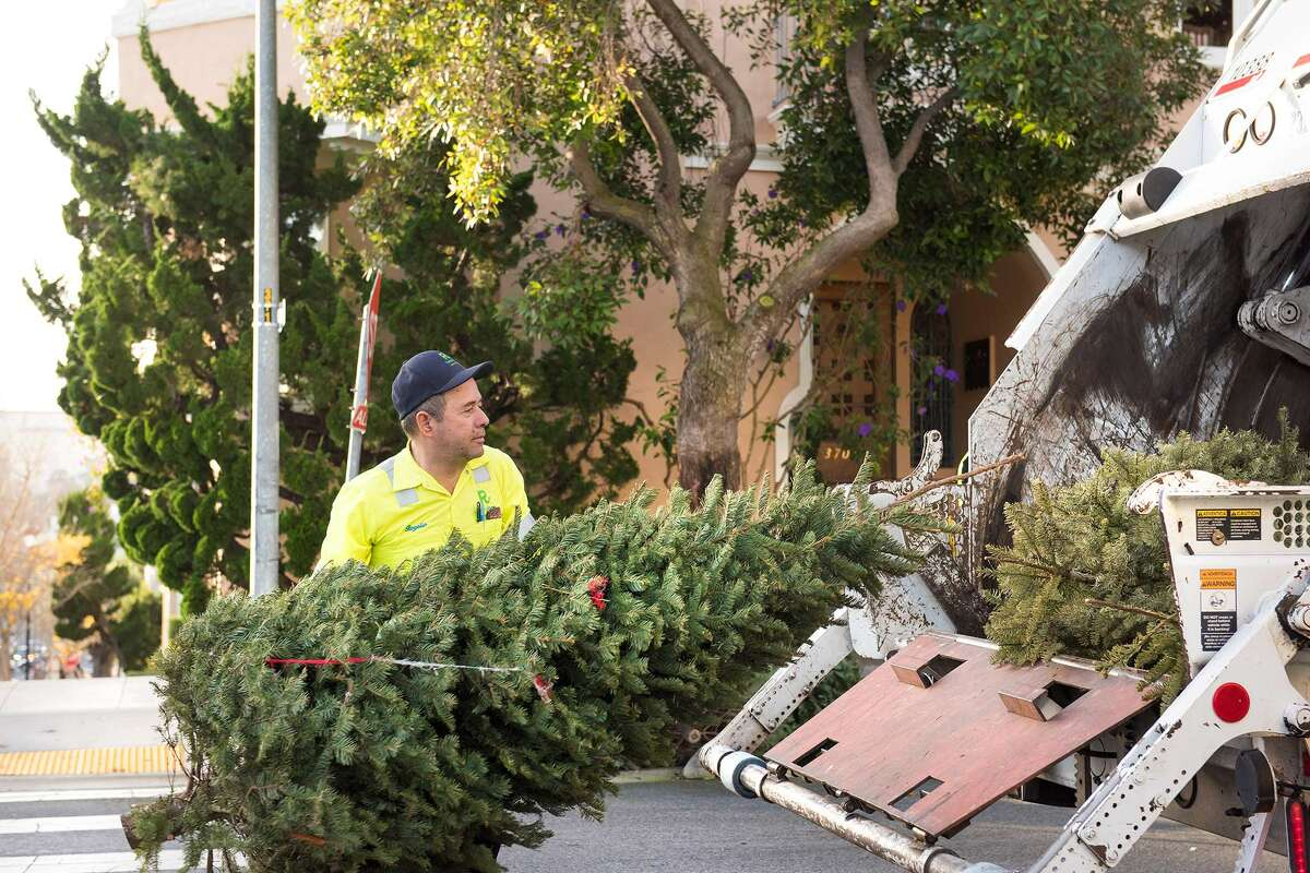 We followed SF Recology to see where all of the curbside Christmas trees end up.